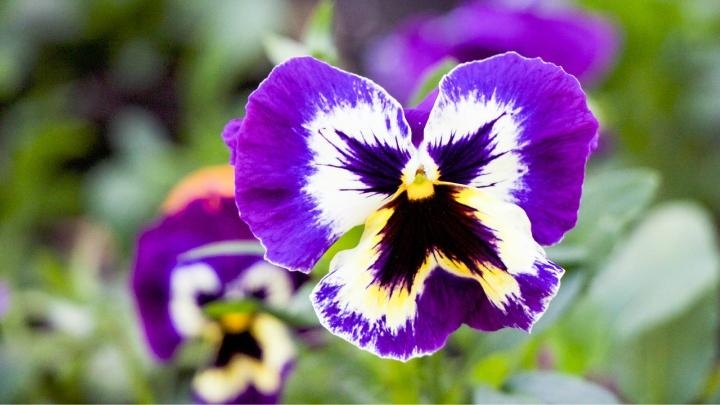 indispensable plants