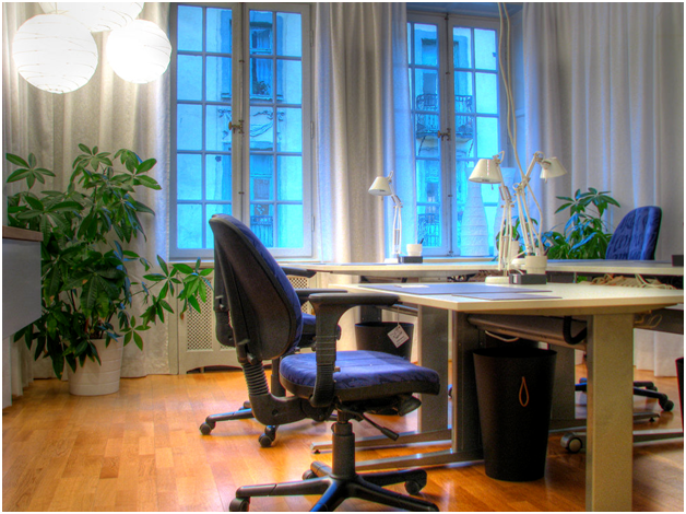 The 8 primary benefits of having plants in your office