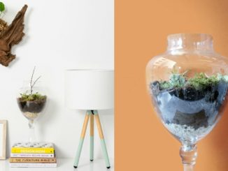 decorative-terrarium