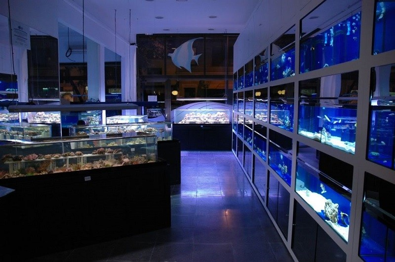 How to Open a Fish Store: Instructions and Calculation of Investments