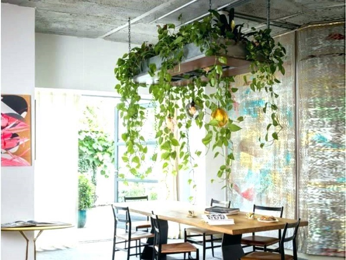 indoor hanging plants ideas