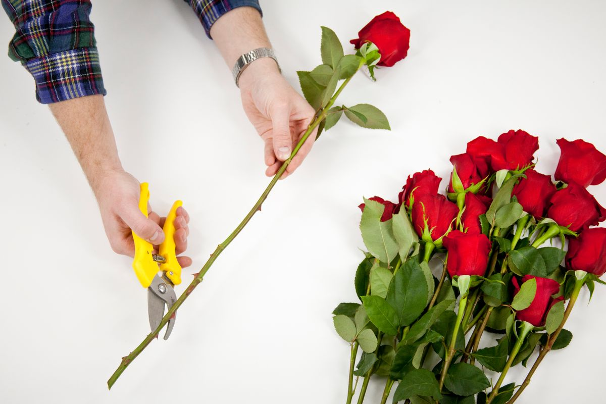 how to keep roses alive the longest