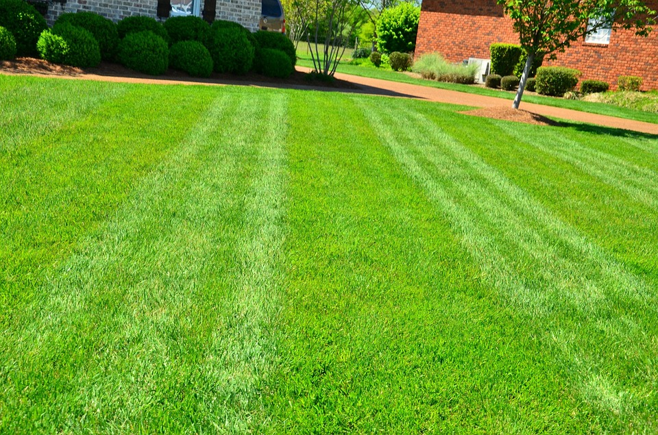 How Do You Maintain a Perfect Lawn? Lawn Maintenance Tips